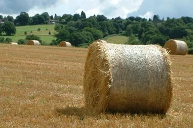 Hay Bales at Little Oddynes Farm