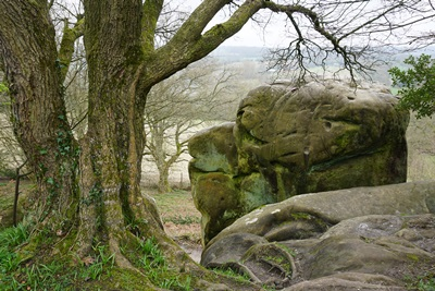 Ardingly Sandstone outcrop at Stone Hill Rocks