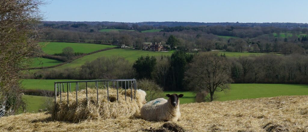 View over High Weald Landscape from Highbrook